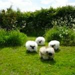 Roaming English pastures